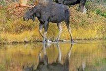 Animals / by Sam Drummond