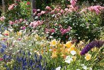 OUTSIDE-GARDEN / garden ideas ,plants, tips, how to ,decor, landscape, DIY... IF IT'S OUTSIDE; IT'S HERE / by Cheryl Brennan