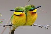 For The Birds. / Beautiful and Wonderful Birds. / by Elaine Marriott