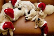 Happy Holidayss / by Kelly Seago