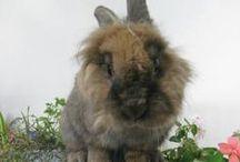 Lapaki / The rabbit. / by Amanda Stanton