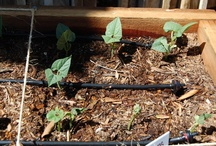 Drip Irrigation | Drip Master / The newest eco-friendly form of irrigation.  Learn the who, what, when, where and why of Drip Irrigation. / by Orbit Irrigation