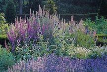 garden ideas / by Joanne Licsko