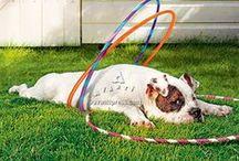Dogs Are People Too / Avanti brand board / by Avanti Press