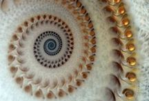 Spirals / by Júlía Garðarsdóttir