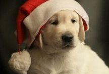 CHRISTMAS ~ LOVE / by Adele Burgess