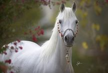 Horses / by Patricia Calvert