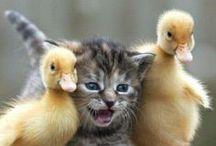 Animal Amazing Friendship / by Frieda Hoppen