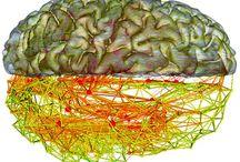 NeuroScience / by Steve McGraw