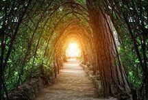 Caminos / Walkways / by OLGA RUIZ