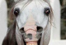 Equestrian / by Susan Anwer
