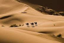 Desert's / by Lilly Jordan