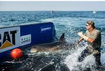 Expedition Cape Cod / by OCEARCH