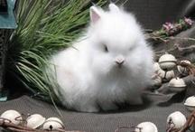 Bunny Rabbits / by Rhonda Pearson