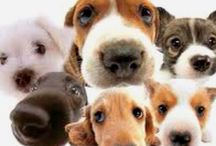 puppynoses / by de .