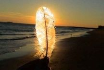 Nature & Art - Feathers & Wings / by Liz Ronning