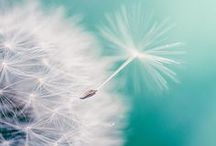 Nature & Art - Dandelions / I would have never guessed I would have a board for these! / by Liz Ronning