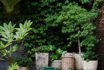 LLL Gardening / by Lush Little Landscapes