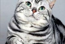 Cats...Gotta Love 'em.. / Cats / by Julie Kono