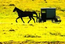 Buggies / Get a move on! All things Amish buggies! / by Amish Wisdom