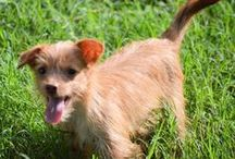 #Adoptable Dog of the Day / Adoptable dogs looking for a forever home / by DogTipper.com
