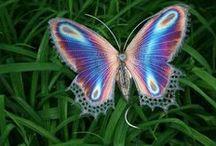 Butterflies and Moths / by Sandra Raichel