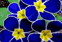 Blooms / by Sandra Raichel