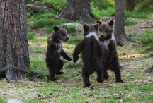 Bear / by Sandra Raichel