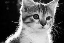 Cats / by Unodedos Recetas
