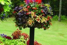 Garden / I love love love gardening / by Dolly Rose