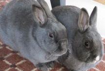 All things Rabbits / by sylvia