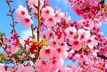 Spring into Spring / by Aranel Enontaina