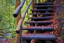 Fall Scenes / by Robert Newman