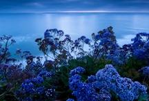 Blue Board / by Robert Newman