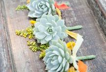 Succulents / by Darata