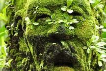 Show Me Your Garden Face! / Garden knowledge / by Myaz Nuggetz LLC