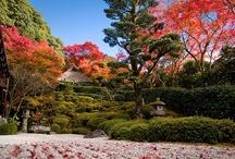 Japanese Gardens  / by Valentin Brekher