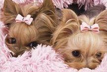 doggie love / by Kathleen Hames