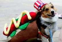 Dogs as Dogs / by National Hot Dog and Sausage Council