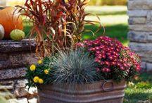 Plantas y exterior / by Camino