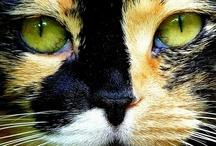 Cats / by Carla Sprangers