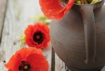 In a Poppy Mood / by Marjolie Maman