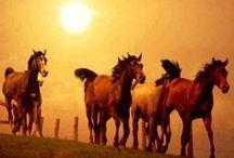 Wonderful Horses 4 / by Tanya Rennich