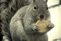 Animals/squirrel/etc.... / by Jennie Schroeder