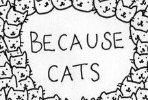 Kitty's 3 / by Jennie Schroeder