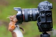 Shoot! / by Michelle Bartlett