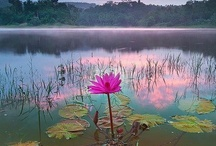Flowers are Always Beautiful / by Jody Bergsma