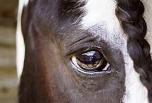 Caballos (Horses) / by Mariella Bobadilla Pichardo