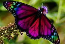 Things that flutter / Incredible butterflies and the like. / by Deborah