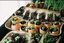 Tips / Gardening tips / by Greenius